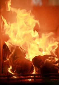 Combustion bûches Bircafeu